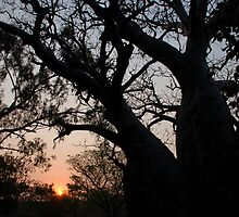 Boab Tree Sunset by Matthew Reid