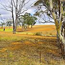 Golden Fields by Terry Everson