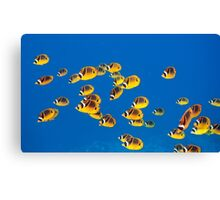 School of Butterfly Fish Canvas Print