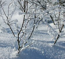 Snow branches by Eyeprod