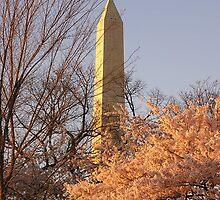 Cherry Blossoms & Washington by Megan Evorik