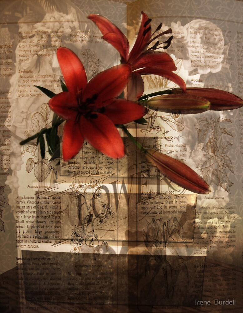 The Language of Flowers  by Irene  Burdell