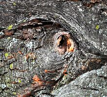 See the Eye-  Then Find the Bird by goddarb