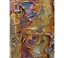 Paper Bark Abstract Photographic Print