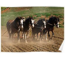 Clydesdales working the land - Gippsland, Victoria Poster