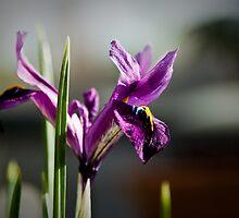 www.PixelPerfectPhoto.com by Bryn Jones