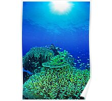 Coral reef scene Poster