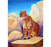 Cougar on the Rocks Photographic Print