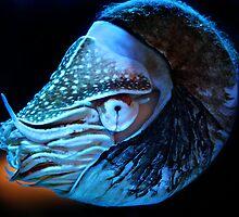 Nautilus by Bobby McLeod