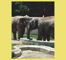 Indian elephants in their Kids Clothes