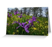 Wild Iris and Buttercups Greeting Card