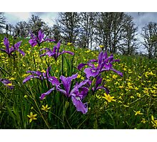 Wild Iris and Buttercups Photographic Print