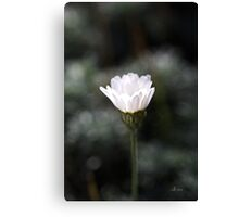 Nature's Glowing Canvas Print