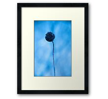 blue one... Framed Print