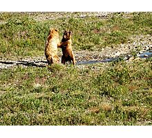 Denali Wildlife Photographic Print