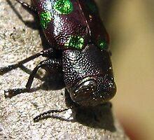 Beetle Jeweled by Heavenandus777