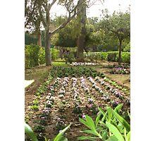 Argotti Gardens, Floriana, Malta Photographic Print