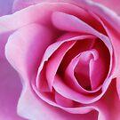 Pink by Lynn Starner