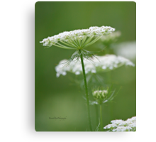 Flower Stack - Queen Anne's Lace Canvas Print