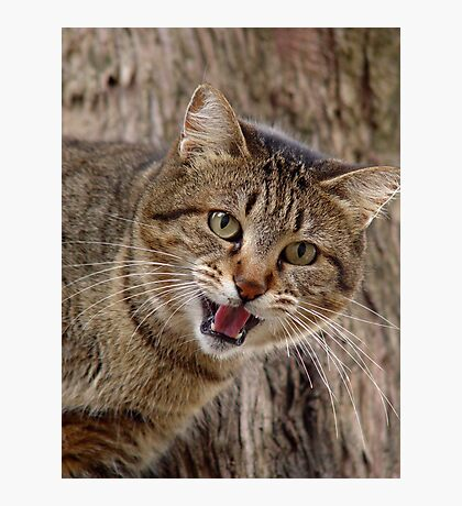 The Cat's Meow Photographic Print