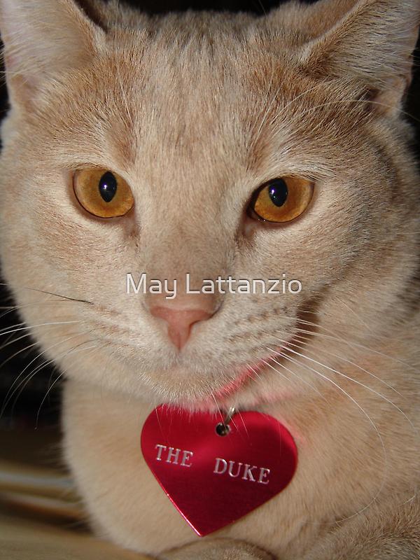 The Duke by May Lattanzio
