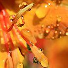 Golden Drops by Susan van Zyl