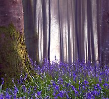BIRD SONG, Delcombe Woods. Dorset by outwest photography.co.uk