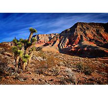 Arizona Wilderness Photographic Print