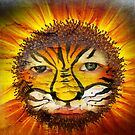 Tigerboy Sunshine by Clare Colins