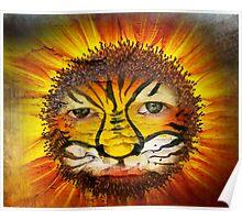 Tigerboy Sunshine Poster