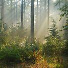 The magic of September light by jchanders