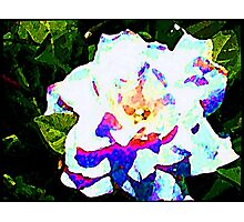 Coloured White Photographic Print
