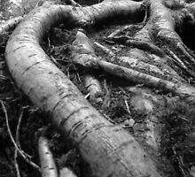 Roots by Katarina Kuhar