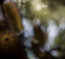 Banksia Land by annsolo