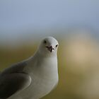 What are you looking at? by Michael Fotheringham Portraits