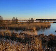 Landscape *Fochteloerveen* by ienemien