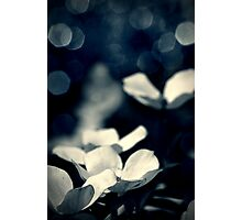 Papillon Photographic Print