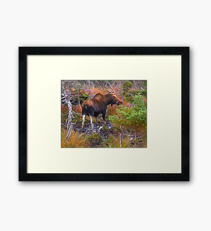 Watchful Waiting Framed Print