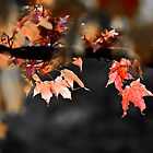 Fall Leaves by Jen Orr