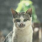 Meow-Meow v.2 by tropicalsamuelv