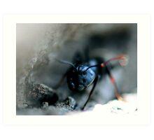 Ant Closeup Art Print