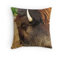 Take My Picture!  Will You! Throw Pillow