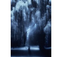Dancing under the willow Photographic Print