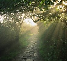 God's Path by Peter Zentjens
