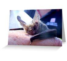 lesser long-eared bat Greeting Card