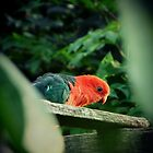 King Parrot by tara-antonia