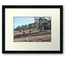 Urban Kangaroos Framed Print