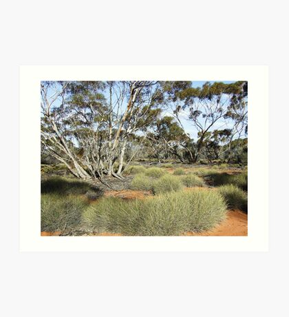 mallee outback Art Print