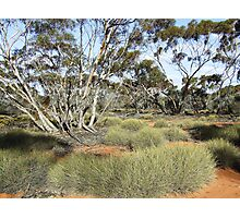 mallee outback Photographic Print