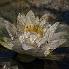 Textured Pond Lily by Gracey